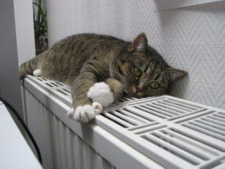 Katze schläft auf einem Heizkörper