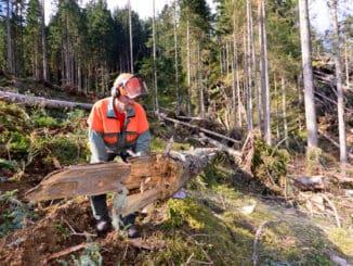 Windwurf in österreichischem Wald