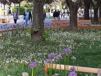 Ein Blumenbeet mitten in der Stadt